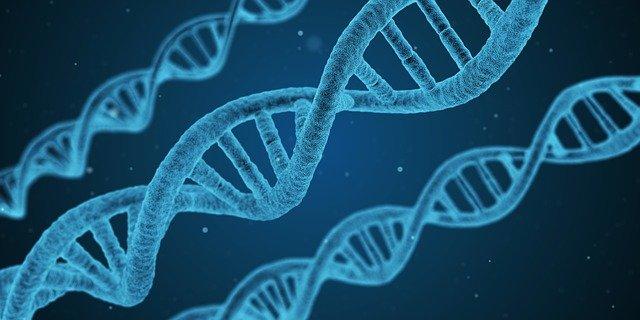 Cadena de ADN