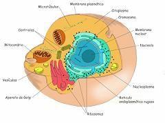 definicion partes de la celula: