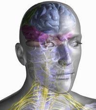 Nervios