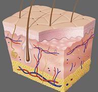 Baneotsin de atopicheskogo de la dermatitis