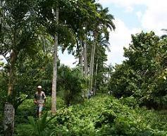 Definici n de selva qu es significado y concepto for El tiempo en macanet de la selva