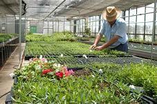 Definici n de vivero qu es significado y concepto for Plantas que hay en un vivero