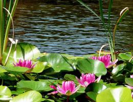 Definici n de plantas ornamentales qu es significado y for Concepto de plantas ornamentales