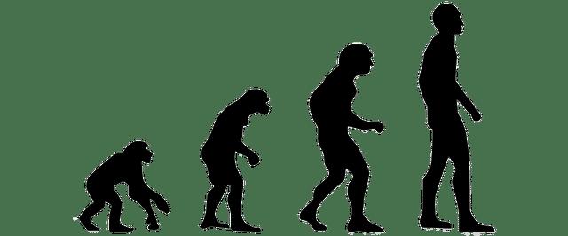 Proceso evolutivo