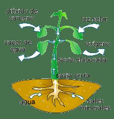 Organismo autótrofo
