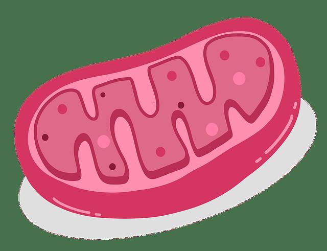 Elemento celular
