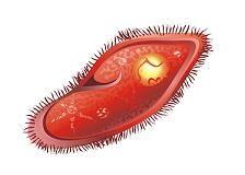 Organismo unicelular