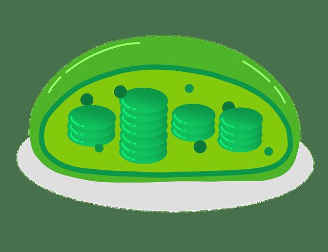 Componente celular