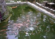 Definici n de piscicultura qu es significado y concepto Estanques para piscicultura