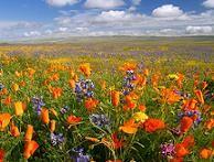 define primavera