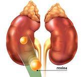 Renina
