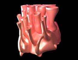 Retículo endoplasmático liso