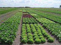 Definici n de rotaci n de cultivos qu es significado y for Cultivos verticales definicion
