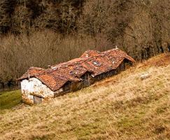 Ruralización