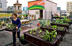 Definición De Agricultura Urbana Qué Es Significado Y