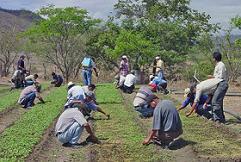 Agroexportador
