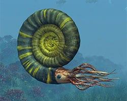 Cefalópodo