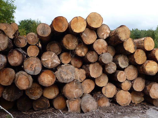 Recursos forestales