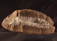 Paleobotánica
