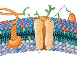 Proteína integral