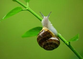 Gasterópodo