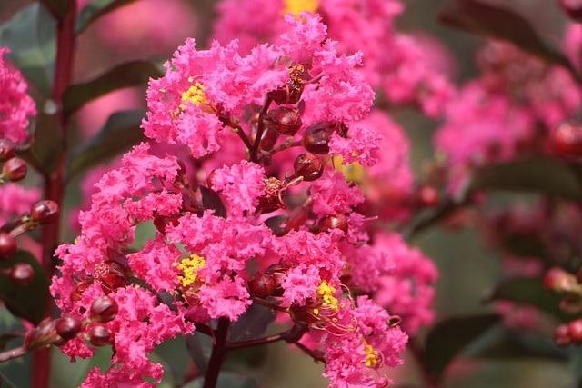 Crespón flor
