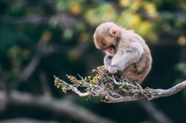 Primatología árbol