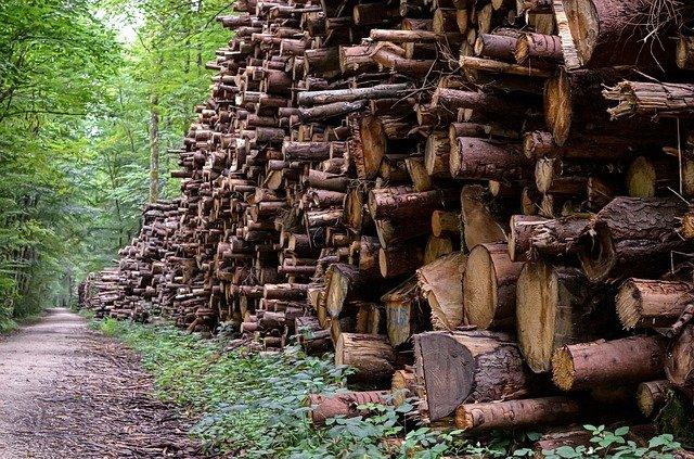Sobreexplotación bosque