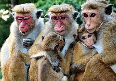 Primatología