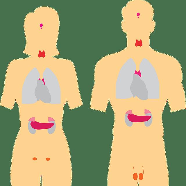 Endocrinología órganos