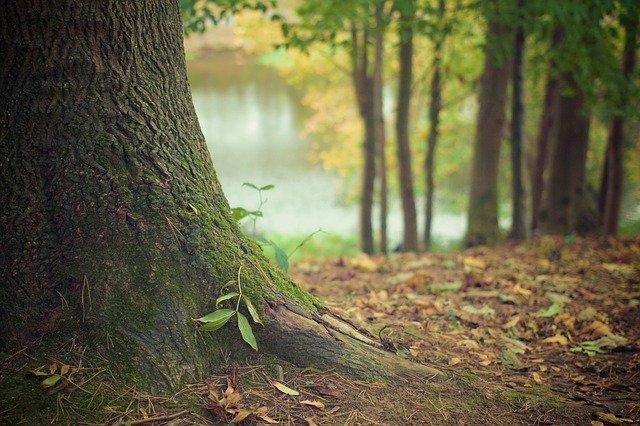 Biotipología bosque