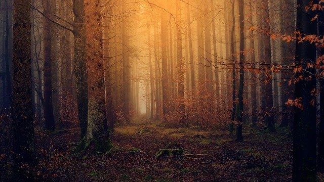 Fosilización bosques