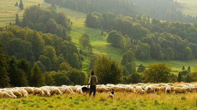 Mayoral ganadería
