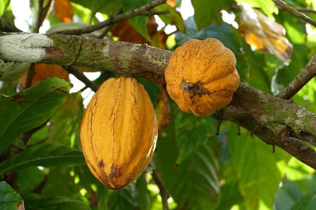 Oligopsonio cacao