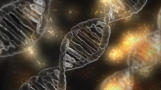 Autosoma ADN