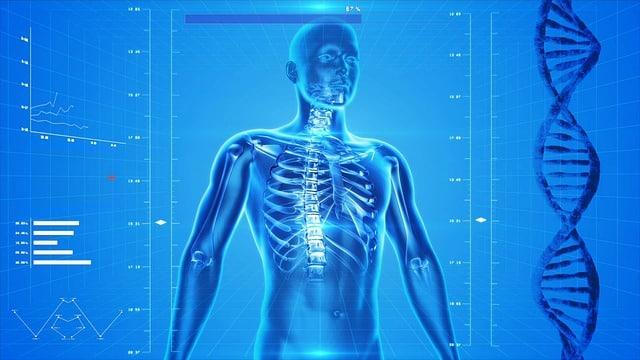 Autosoma cuerpo humano