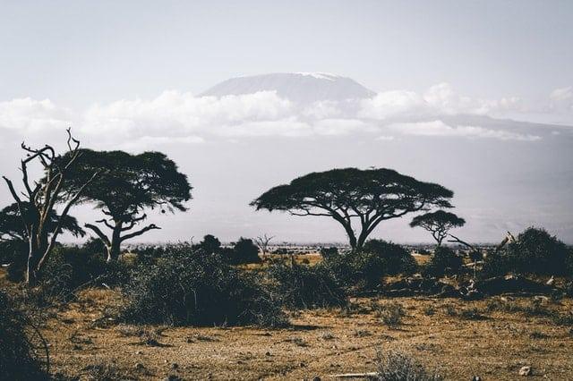 Ecorregión bioma sabana