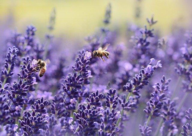 Interacción biológica abejas flores