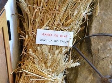 Gavilla