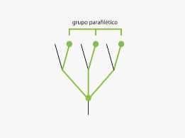 Parafilético