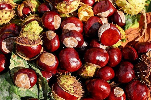 Frutos del castaño
